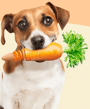 人も犬も鍼灸で健康に!ではなくて健康の秘訣は医食同源