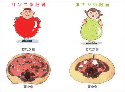 内蔵脂肪、皮下脂肪 引用