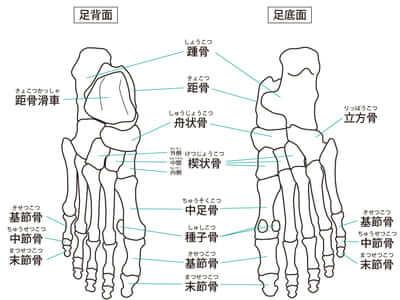 足の骨26個