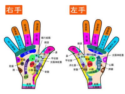 手の反射区